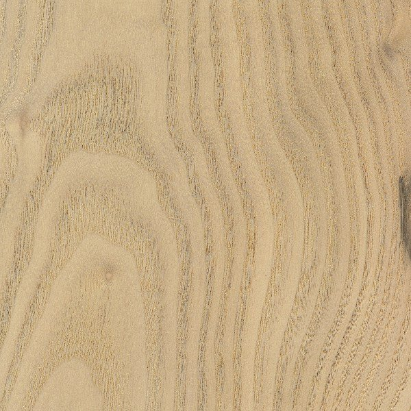Sassafras is a pretty piece of wood, with grain that is reminiscent of oak or chestnut!