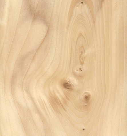 This close-up of a white spruce plank shows the lovely grain of this commonly used type of wood.