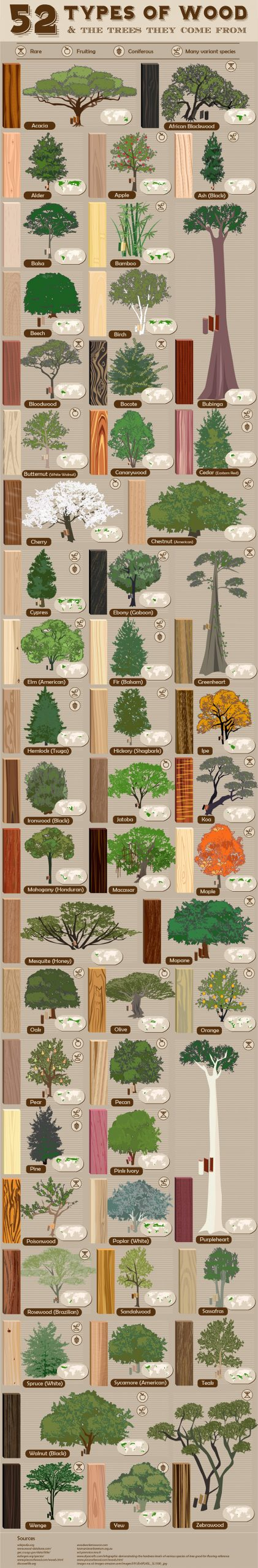 Types of wood for woodworking infographic!